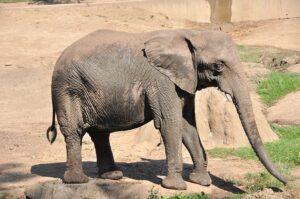 elephant-93103_640